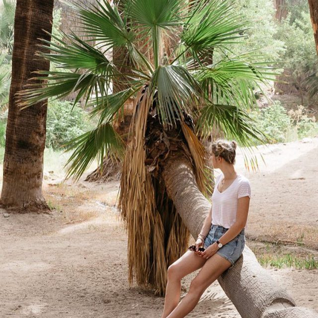 New Blogpost is onlinenewpost new blog news Palme palmesprings palmcanyonhellip