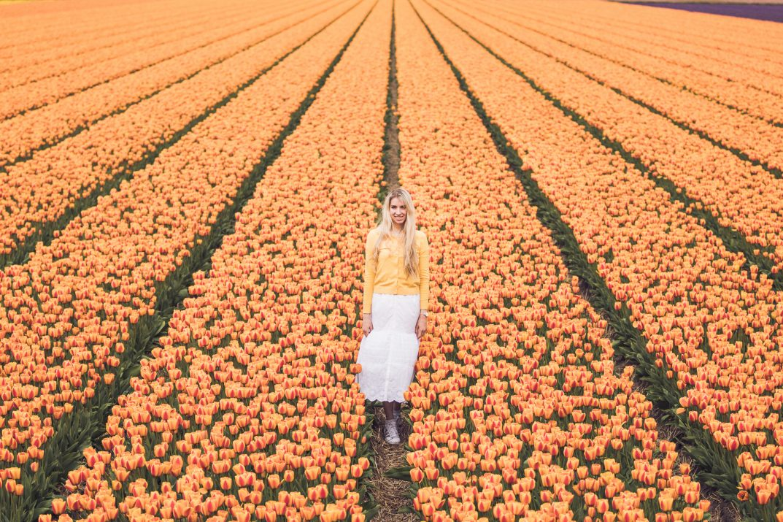 tulpenfelder_holland_haarlem