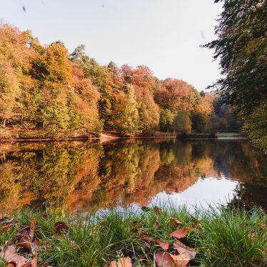 Ein Tag im Wald – Orangerie und Karlsbergweiher